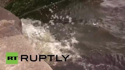 Малки тюленчета са пуснати на свобода за първи път