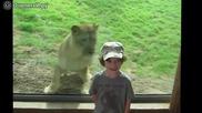 Деца и животни в зоопарка