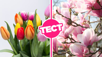 ТЕСТ: Пролетта дойде! Какво знаеш за най-известните цветя?