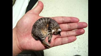 мале колко малко коте