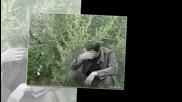 Братья Радченко - Горчит полынь