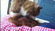 Котка събужда стопанката си