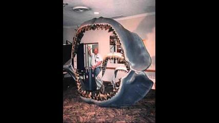 Megalodon - Worlds Biggest Shark