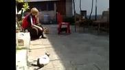 Голям смях - Кученце и котка се борят 4