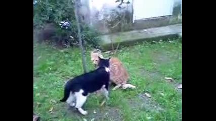 Отмъщението на котката ( Смях )