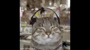 Танцуващи Котки