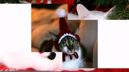 Коледните Котета #christmas cats 2