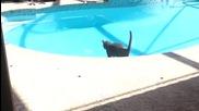 Котки срещу вода