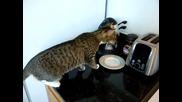 Котка срещу тостер