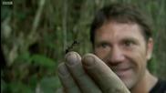 Най - голямата мравка в света