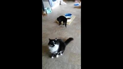 Жена превърна дома си в приют за котки