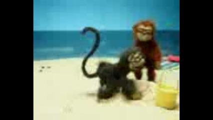 Възбудена маймуна - Смях Full Clip * Good Quality