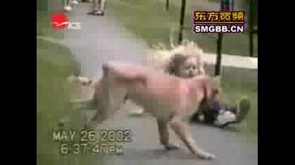 Супер смешни кучета (мн смях !!!)