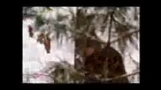 Ловец и жертва Горски нарушител