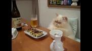 Най - уважаваната котка в света !!!