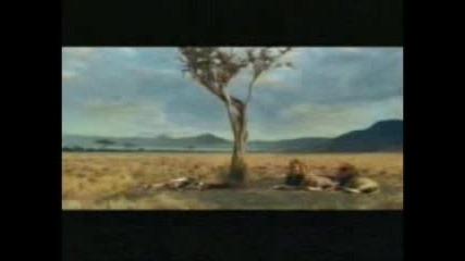 Я Глей Ти Къде Пораснало Дърво