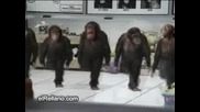 Яко Смях - Танцуващи Маймуни