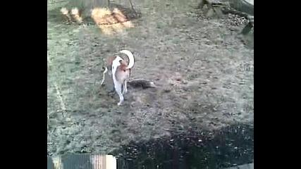 Хитър Опосум умира пред куче