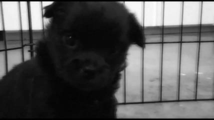 Адски сладки малки кученца - бяло и черно се боричкат (its Pure Puppy Love...)