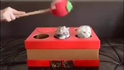 Малки котенца във вариант на играта ''удари къртицата''.