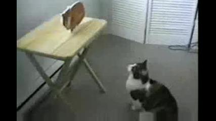 Котка Срещу Картонена Котка