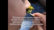 Наи Красивото Цвете