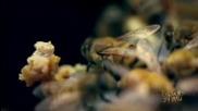 Изчезването на Пчелите и Какво е Бъдещето на Планетата - Големите Загадки