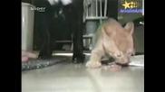 Отдръпни Си Муцуната Пес!!!(смях)