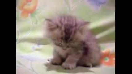 Доста Сънливо Коте!