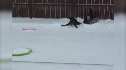 Кучетата и зимата