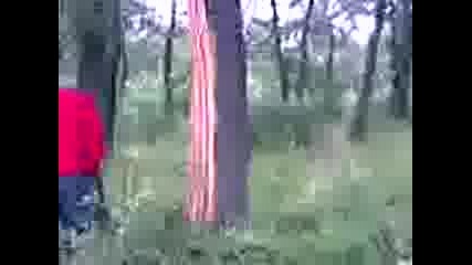 Дърво ударено от гръм
