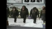 Tancuvashtite Maimuni