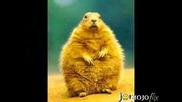 Дебели Животни