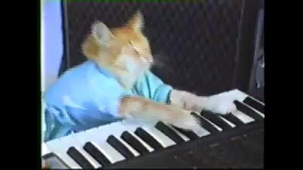 Музикалната котка 1
