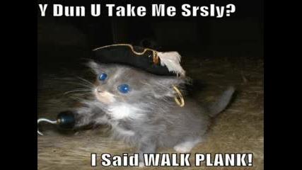 Много Смешни Котки Гледайте