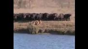 Битка В Резервата Кругер