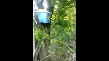 капан за пчели