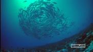 Kоралови рифове Hd