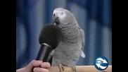 Папагала имитира всички възможни животни, гледайте и се забавлявайте