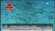 Синоптици бият тревога заради явлението Ел Ниньо