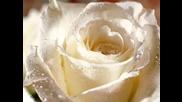 И Круг, В Королёв Букет Из Белых Роз