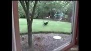 Котка стряска заек
