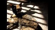 Котка с две лица
