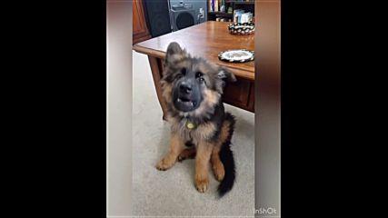 Смешно куче Моки пее (изборът на Radio VOX за 08.02.2019 година)