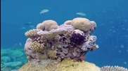 Nurseries Bring Coral Reefs Back to Life
