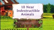 10 същества, които са почти неунищожими