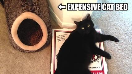 Логиката на котките
