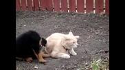 Коте и куче се боричкат