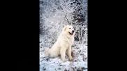 Шаро и първия сняг /детска песен/