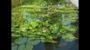 Agosto - Parco Sigurta a Valeggio sul Mincio